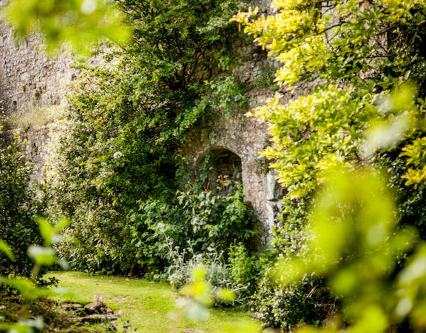 Gidleigh Castle Walk and Afternoon Tea