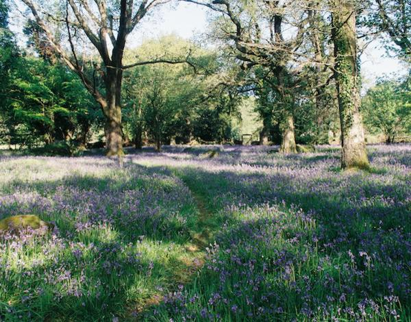 Bluebell Woodland Walk with Lunch