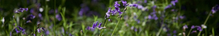 Bluebell Walk at Gidleigh Park